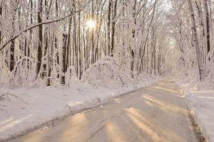 Бесплатные фото зима,лес,деревья,дорога,пейзаж
