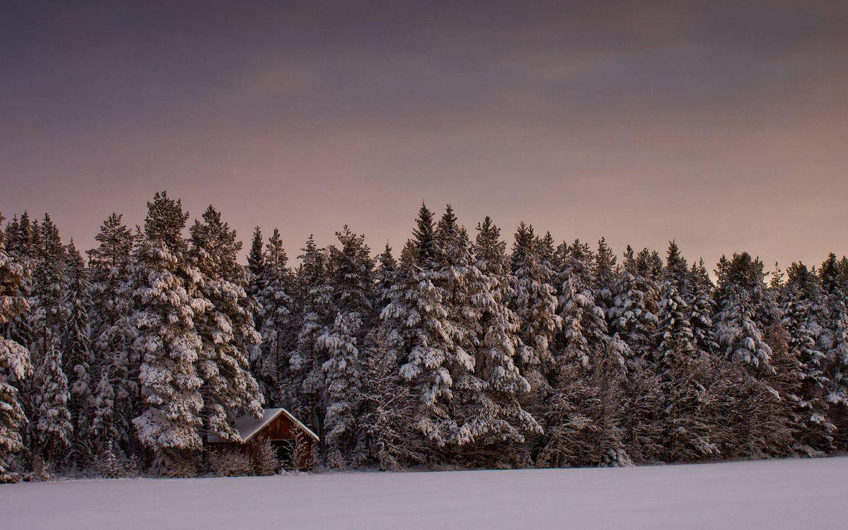 Фото бесплатно зима, сугробы, избушка, домик, деревья, лес, снег, небо, пейзажи