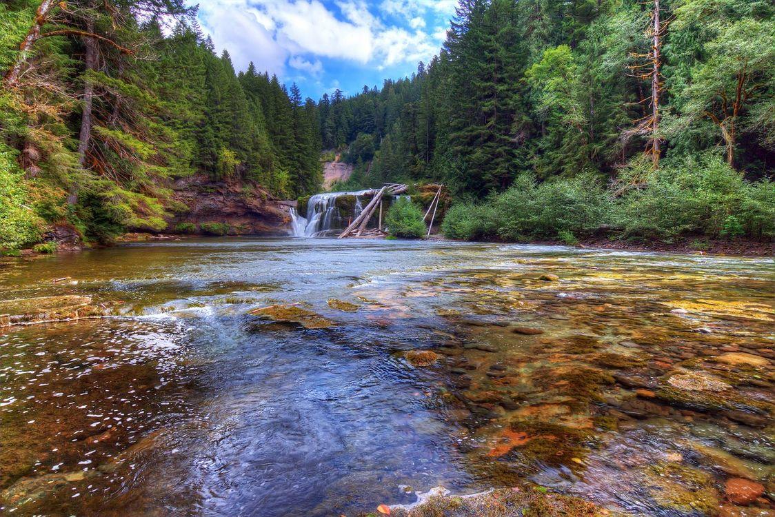 Фото бесплатно Lower Lewis River Falls, Lewis River, Washington, река, лес, деревья, пейзаж, пейзажи