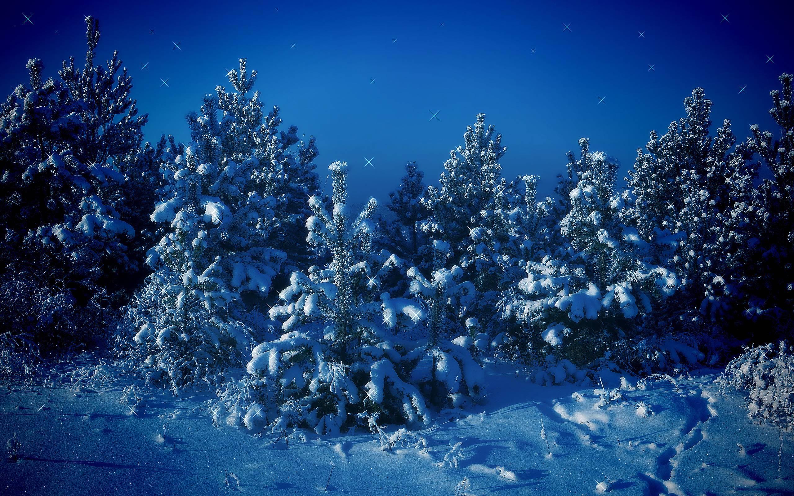 природа деревья ель небо звезды скачать