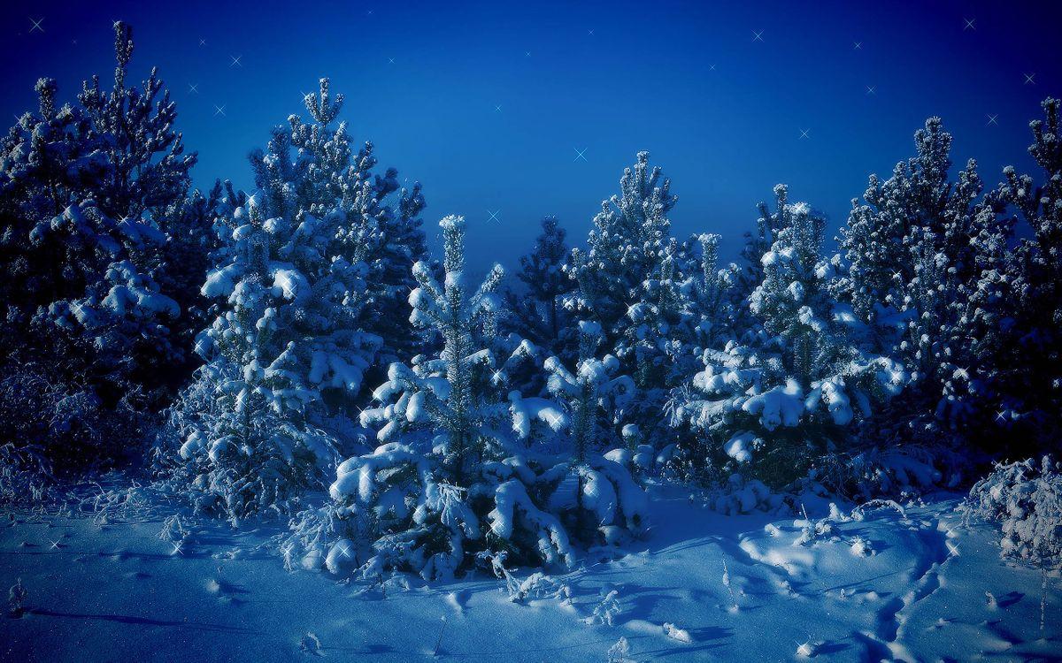 Фото бесплатно зимние елки, снег, сугробы, ночь, природа