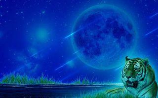 Обои космос, 3d, art, дорога, тигр, планета