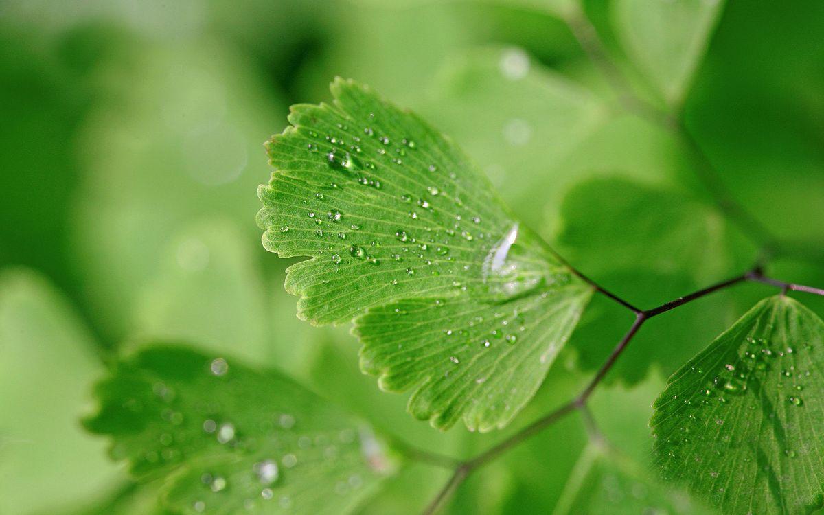 Фото бесплатно кустарник, листки, зелень, капли, роса, природа, макро