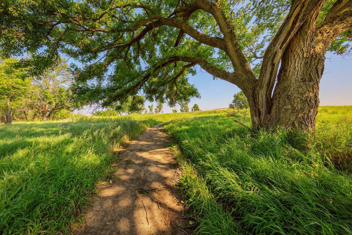 Бесплатно деревья, поле - фото красивые