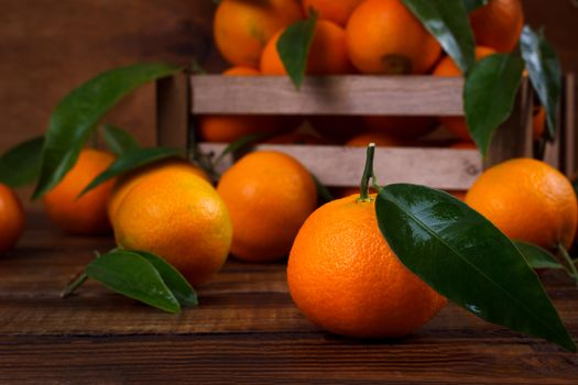 The most beautiful photo of citrus, tangerines
