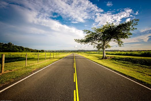 Фото бесплатно дорога, поля, дерево