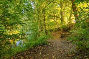 Бесплатные фото речка,лес,деревья,тропинка,пейзаж
