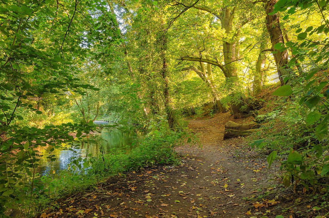 Фото бесплатно речка, лес, деревья, тропинка, пейзаж, природа