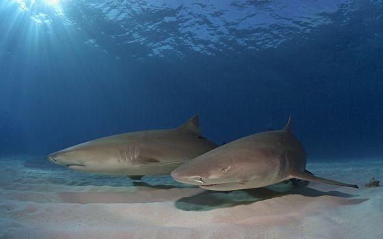 Photo free sharks, gills, fins