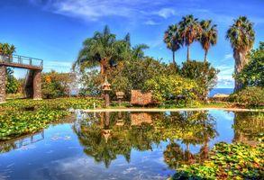 Бесплатные фото Канарские острова,Пуэрто-де-ла-Крус,Испания