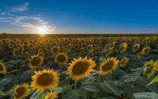 Фото бесплатно флора, цветы, закат