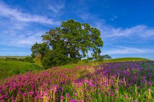 Бесплатные фото поле, холмы, дерево, цветы, пейзаж