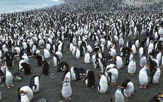 Бесплатные фото море,побережье,пингвины,клювы,перья,стая