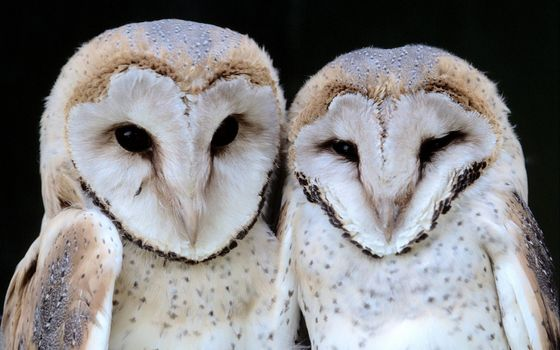 Photo free owls, beaks, eyes