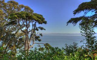 Бесплатные фото деревья,кустарник,море,залив,горизонт,горы,небо