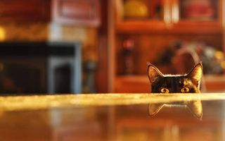 Бесплатные фото кот,черный,морда,глаза,уши,стол
