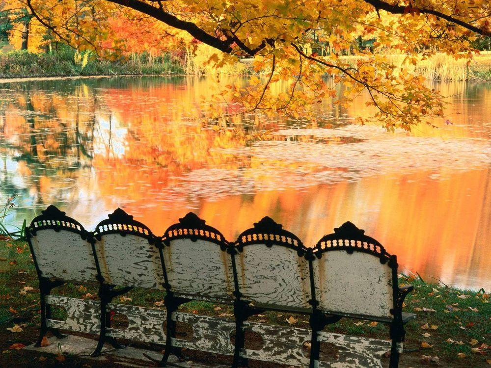 Фото бесплатно осенний парк, скамейки, озеро - на рабочий стол