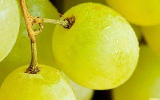 Бесплатные фото ягода,виноград,зеленый,кисточка,веточка,влага