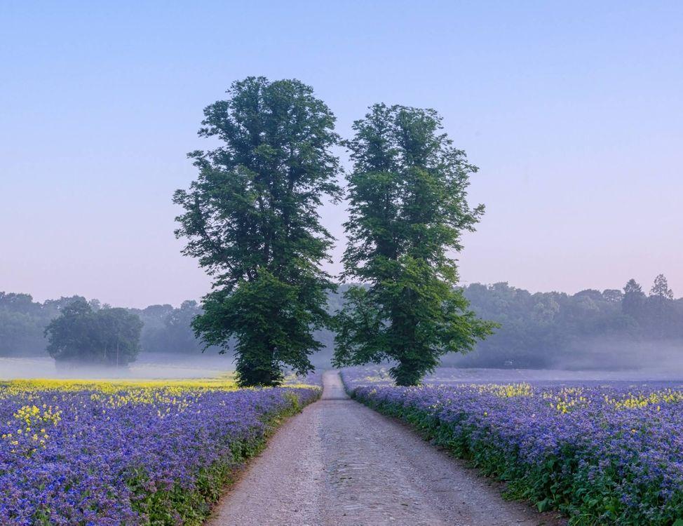 Красивые обои поле, дорога на рабочий стол