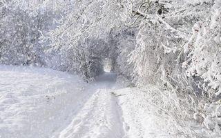 Бесплатные фото зима,дорога,трава,снег,сугробы,кустарник,деревья