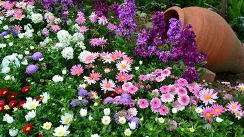 Бесплатные фото ландшафтный дизайн,клумба,кувшин,цветы разные,лепестки,листья