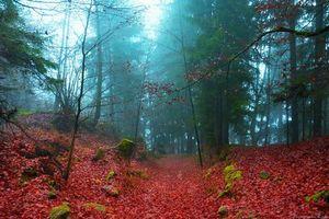Фото бесплатно осень, лес, деревья, туман, природа