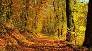 Бесплатные фото осенняя дорога, деревья, лес, листопад