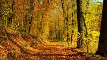 Фото бесплатно осенняя дорога, деревья, лес, листопад
