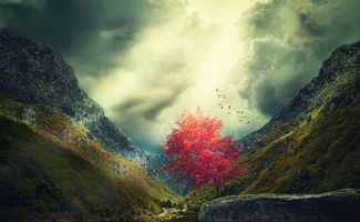 Бесплатные фото горы, закат, осень, дерево, пейзаж