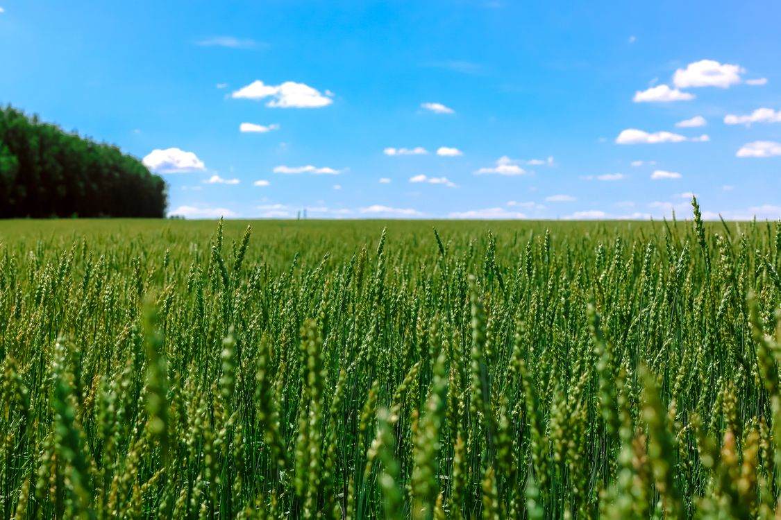 Фото бесплатно высокая трава, поле - на рабочий стол
