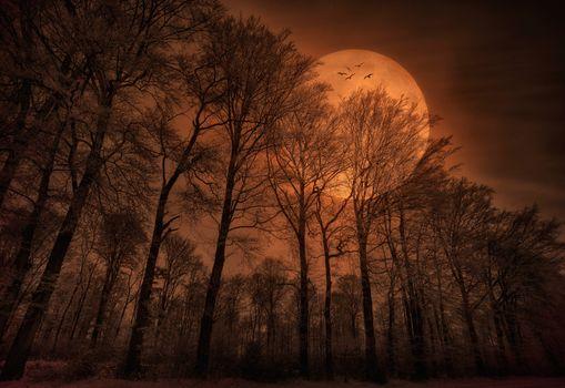 Photo free moon, large, birds
