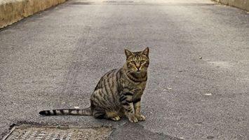 Бесплатные фото кот, шерсть, усы, асфальт, дорога, протектор, животные