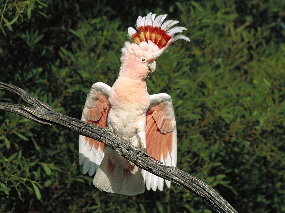 Фото бесплатно животные, птахи, разное