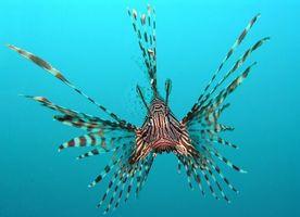 Фото бесплатно животные, риба, море, вода