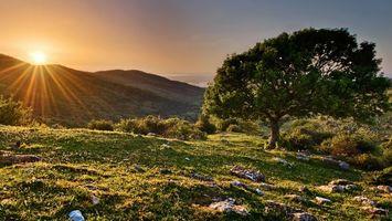 Бесплатные фото горы, дерево, кусты, камни, трава, солнце, пейзажи