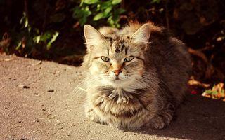 Заставки кот, пушистый, уличный