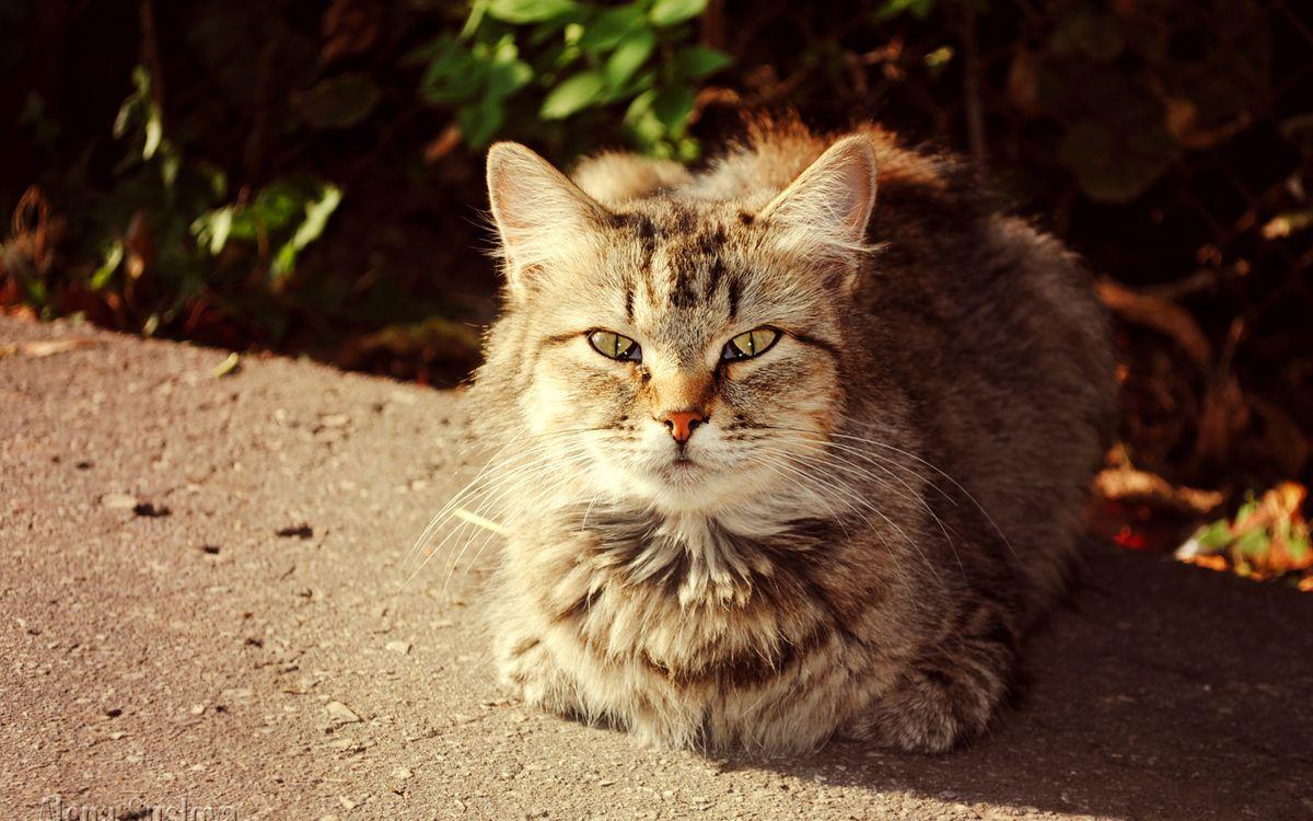 Фото бесплатно кот, пушистый, уличный - на рабочий стол
