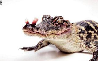 Фото бесплатно крокодил, злой, грозный