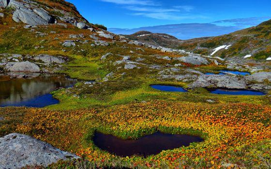 Фото бесплатно цветы, лужи, облака