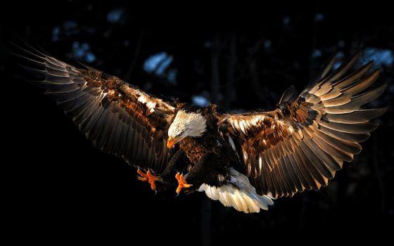 Фото бесплатно орёл, очень, красиво