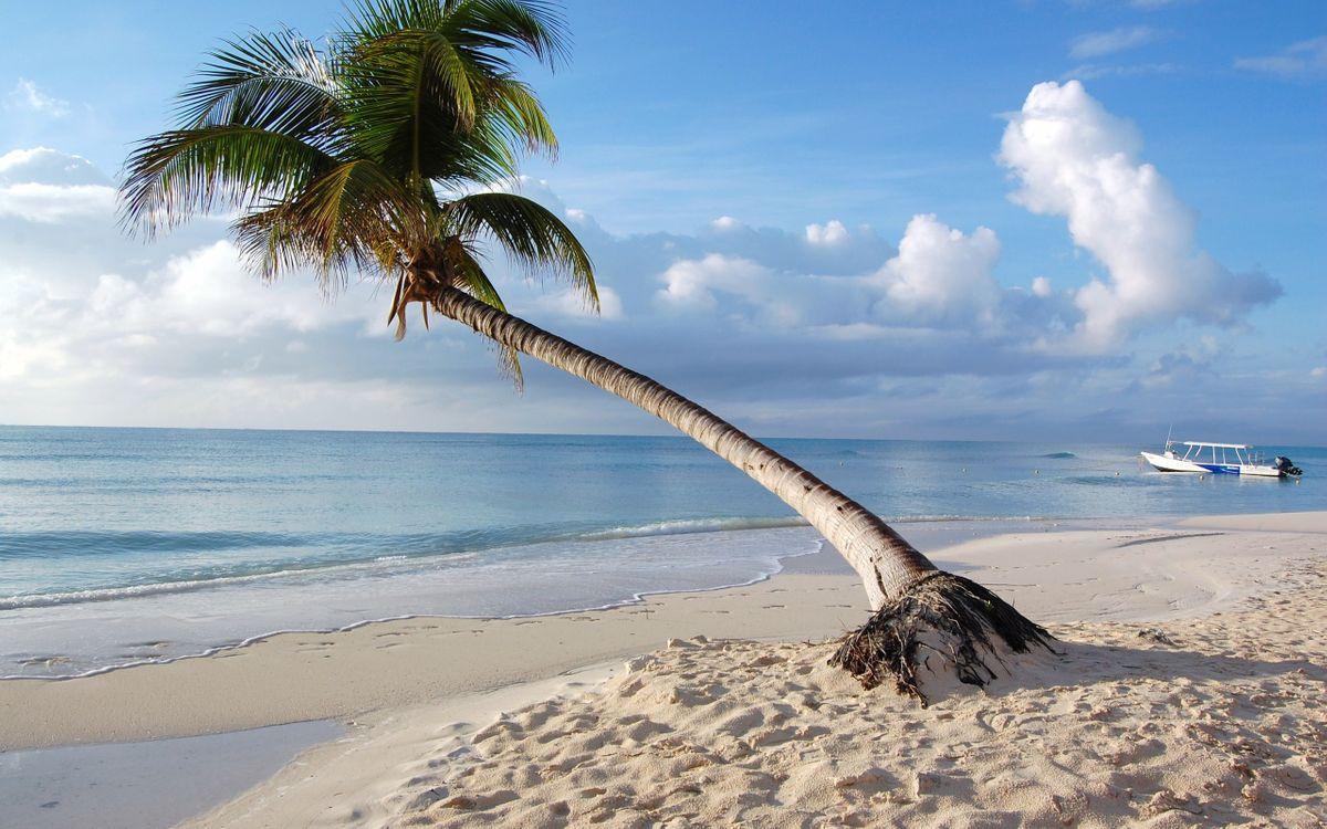 Фото бесплатно пальма, дерево, листья - на рабочий стол