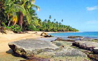 Бесплатные фото тропики,море,пляж,пальмы,природа