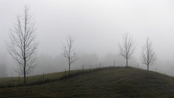 Заставки туман, забор, деревья