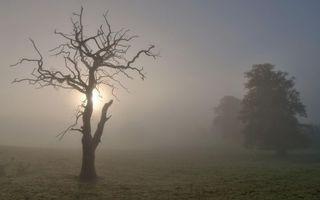 Бесплатные фото туман,старое,высохшее,дерево,ветки,солнце,поле