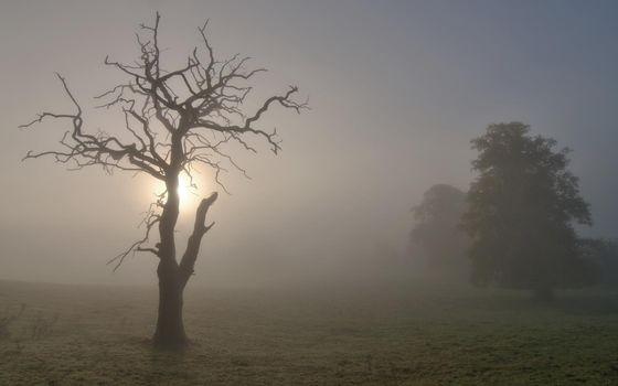 Фото бесплатно туман, старое, высохшее