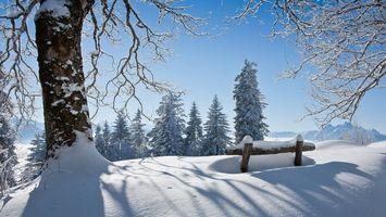Бесплатные фото зима,снег,сугробы,деревья,иней,небо,природа