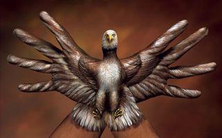 Фото бесплатно птица, итальянский, орёл, креатив, художник, ручной