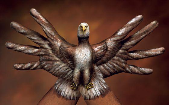 Фото бесплатно птица, итальянский, орёл