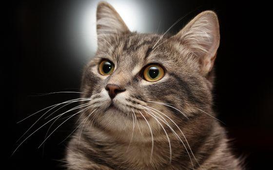 Бесплатные фото кот,красавец,поза