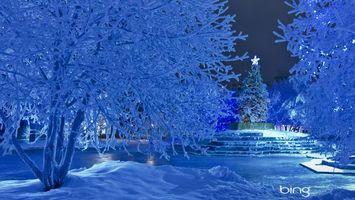 Фото бесплатно елка, деревья, снег